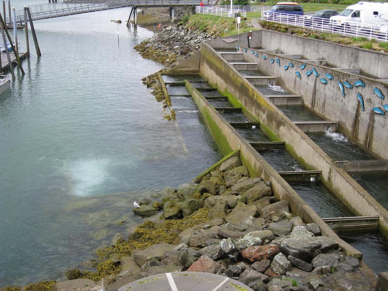 Zenfolio Fynn Goes To New England Blog 6 Alaska Juneau